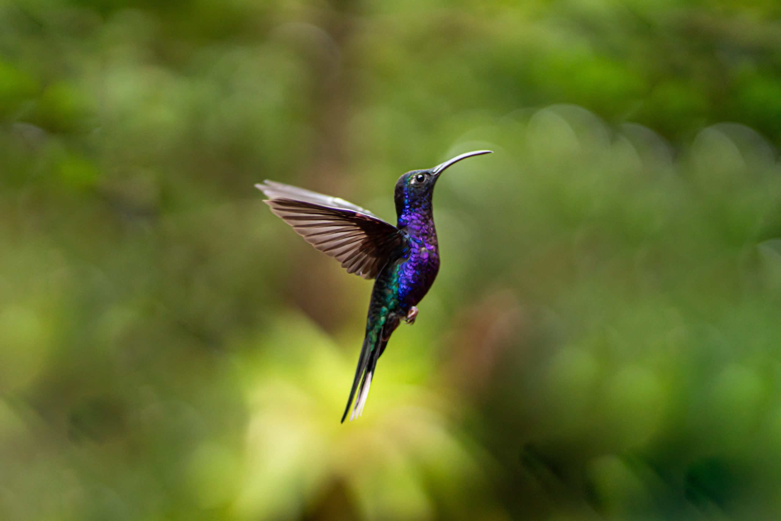 hummingbird gifts