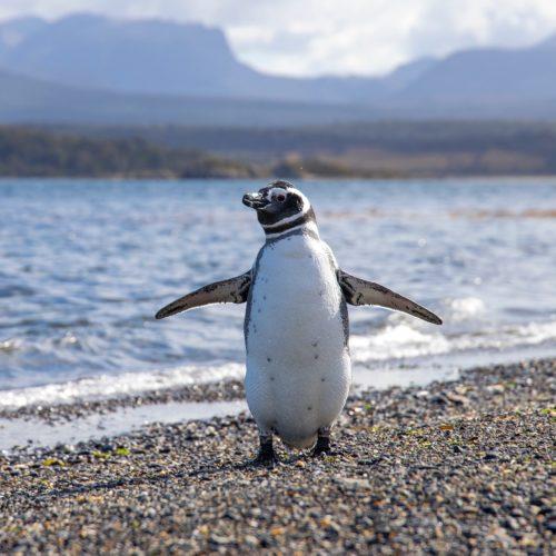 32 Penguin Gifts for Any Penguin-Lover