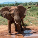 elephant gifts 2020